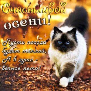 осенние картинки, осеннее настроение, осень позитив, счастливой осени открытки, листья осень, кот осенью, осенняя картинка